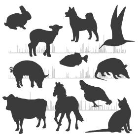services chip-seq - animals