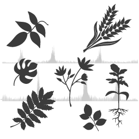 services methylation-plant