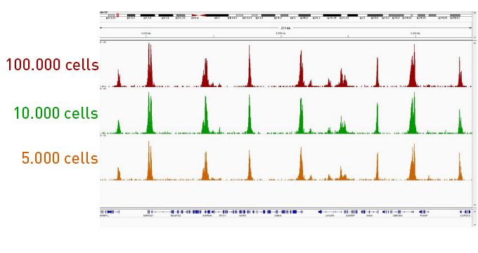 Diagenode-ChIPmentation-sequencing