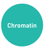 Chromatin-Immunoprecipitation-Diagenode