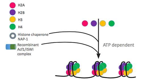 chromatin function assembly kit diagenode