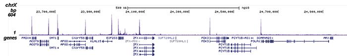 Pol II Antibody ChIP-seq Grade