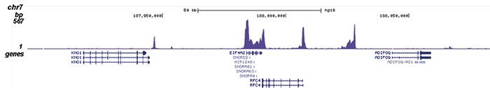 Pol II Antibody validated in ChIP-seq