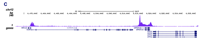 Pol II Antibody for ChIP-seq assay