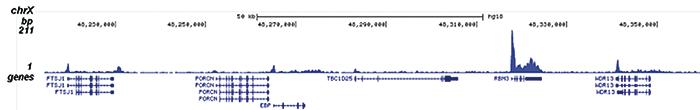 Pol II S5p Antibody for ChIP-seq