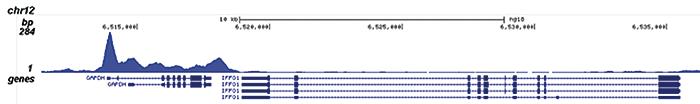 Pol II S5p Antibody for ChIP-seq assay
