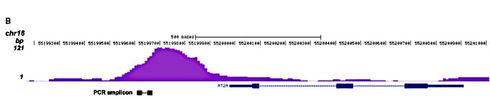 GR Antibody for ChIP-seq