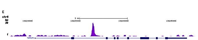 GR Antibody ChIP-seq Grade
