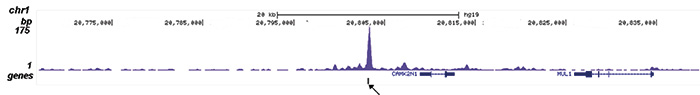 ZMYM3 Antibody validated in ChIP-seq