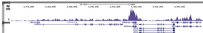 H4K20me1 Antibody ChIP-seq Grade