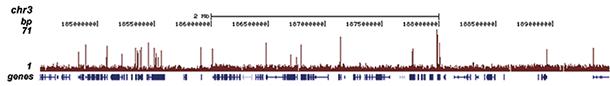 H3K4me3 Antibody ChIP-seq Grade
