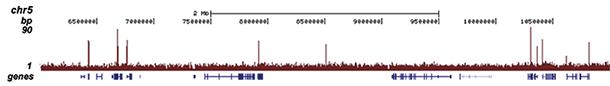 H3K4me3 Antibody for ChIP-seq