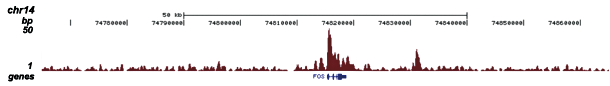 H3K4me3 Antibody validated in ChIP-seq