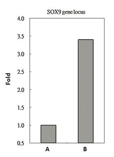 RbAp48 Antibody ChIP Grade