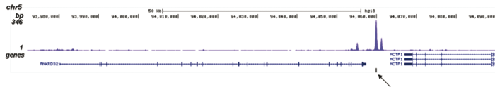 p300 Antibody validated in ChIP-seq