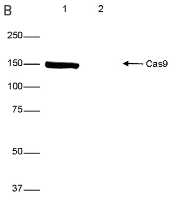 WB figure 2 B
