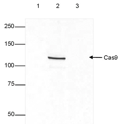 WB figure 1