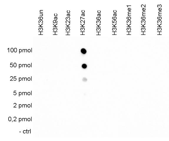 H3K27ac Antibody validated in  Dot Blot