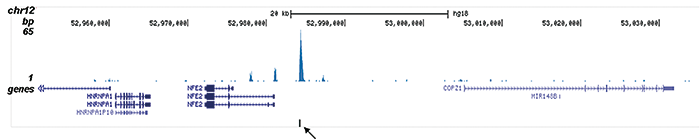 ETO Antibody validated in ChIP-seq