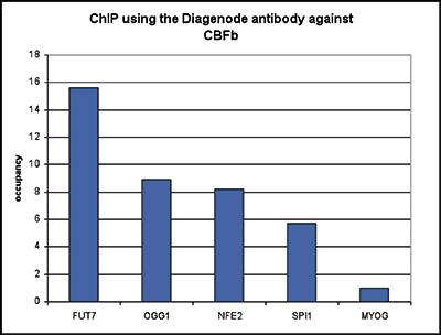 CBFb Antibody ChIP Grade