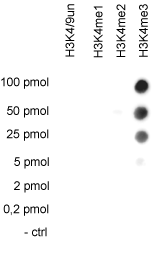 H3K4me3 Antibody validated in Dot Blot