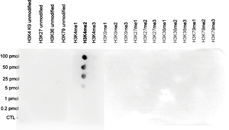 H3K4me2 Antibody validated in Dot Blot