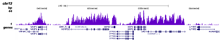 H3K36me3 Antibody ChIP-seq Grade
