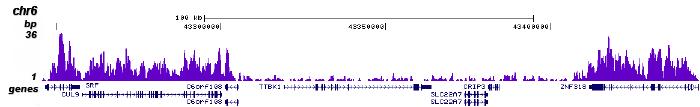 H3K36me3 Antibody for ChIP-seq