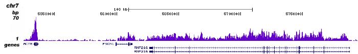 H3K36me3 Antibody for ChIP-seq assay