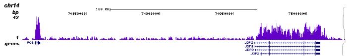H3K36me3 Antibody validation in ChIP-seq