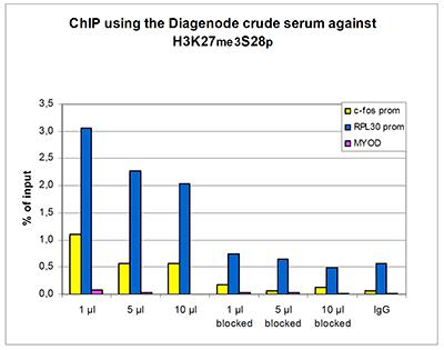 H3K27me3S28p Antibody ChIP Grade