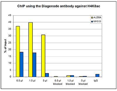 H4K8ac Antibody ChIP Grade