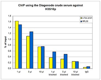 H3S10p Antibody ChIP Grade