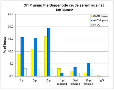 H3K36me2 Antibody ChIP Grade