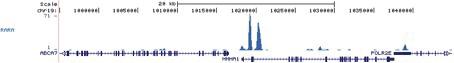 RARA Antibody for ChIP-seq