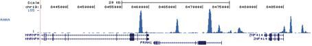 RARA Antibody validated in ChIP-seq