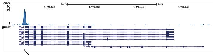 AML1-ETO Antibody for ChIP-seq