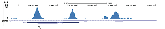 AML1-ETO Antibody for ChIP-seq assay