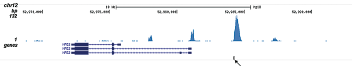 AML1-ETO Antibody validated in ChIP-seq