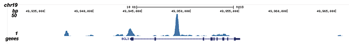 MYH11 Antibody for ChIP-seq assay