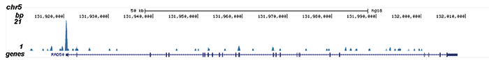 MYH11 Antibody validated in ChIP-seq