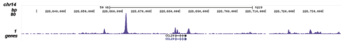 NFKB p65 Antibody validated in ChIP-seq