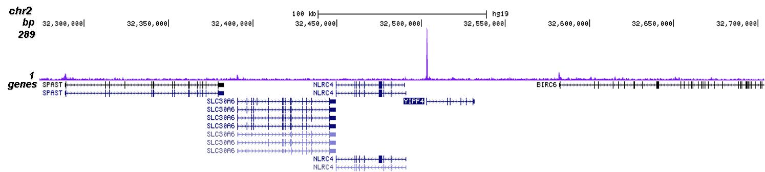 CRISPR/Cas9 Antibody ChIP-seq Grade