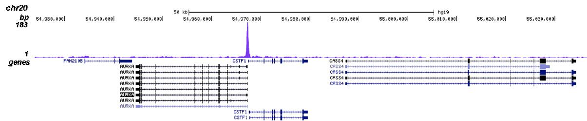 NFYA Antibody for ChIP-seq assay