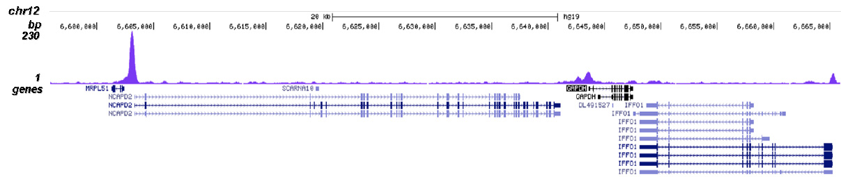 NFYA Antibody validated in ChIP-seq
