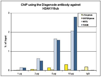 H2AK119ub Antibody ChIP Grade