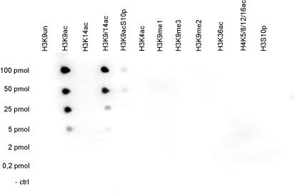 H3K9ac Antibody validated in Dot Blot
