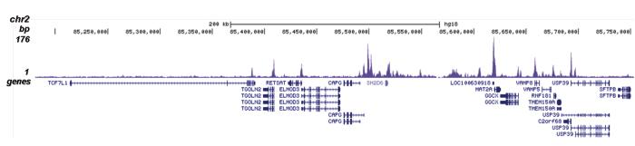 H4K5,8,12ac Antibody for ChIP-seq