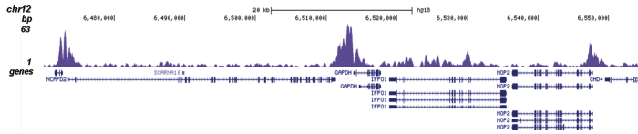 H4K5,8,12ac Antibody validated in ChIP-seq