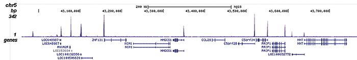 H4K5,8,12,16ac Antibody for ChIP-seq